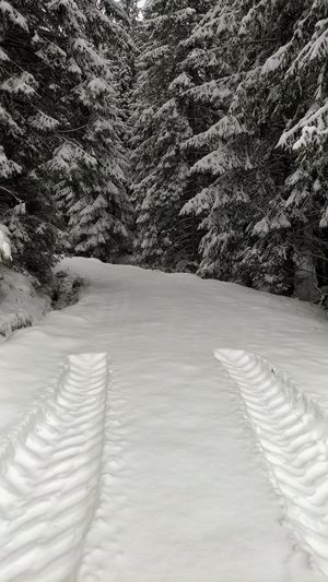 Tree Snow Winter Cold Temperature Forest Pinaceae Tire Track Pine Tree Landscape Deep Snow Pine Woodland Evergreen Tree Track - Imprint Powder Snow Snowdrift Empty Road Coniferous Tree