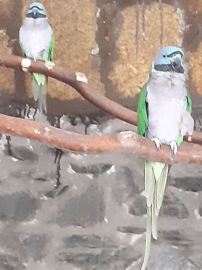 View of two birds perching