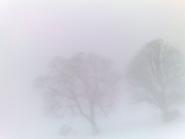 Abstract Bare Tree Beauty In Nature Branch Day Fog Nature No People Outdoors Snowing Tree Winter