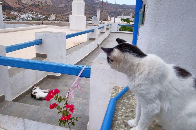 Side View Of Cat In Balcony
