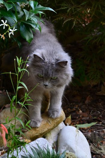 Close-Up Of Cat Standing On Stones At Field