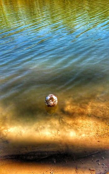 Wilson!!! Riverside Photography Creative Light And Shadow Color Photography Ripples In Time No People Meramec River Teszars Woods
