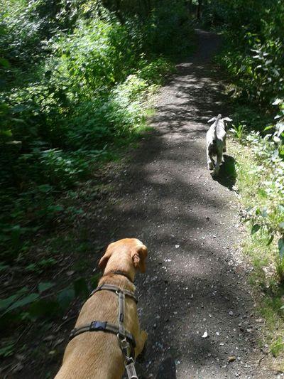 Dog Life Waldspaziergang Unterwegsunddraußen Hunderunde Hunde Run Run Run so süß die zwei