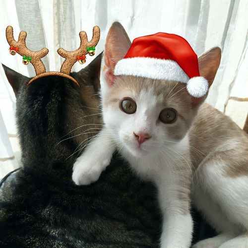 Christmas Kitties Enjoying Life Hanging Out Hi! Cute Cute Pets Merry Christmas! Petstagram