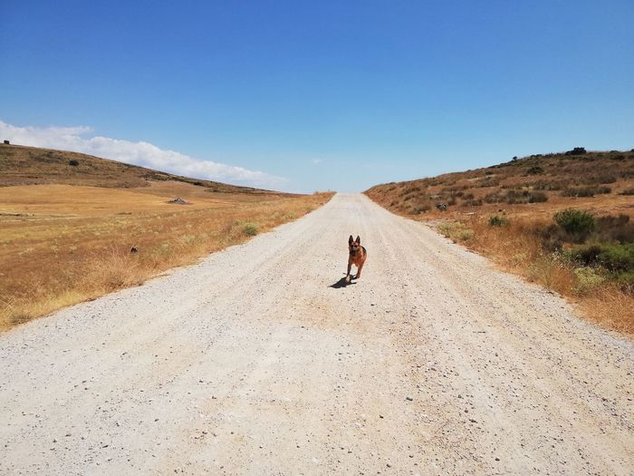 Dog running on road against blue sky