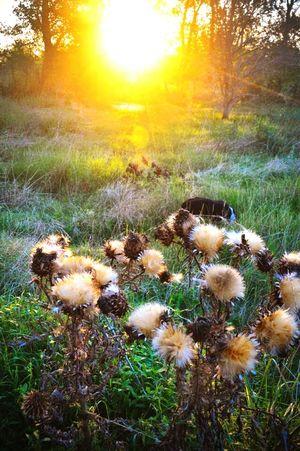 Atardecer Sunset Summer