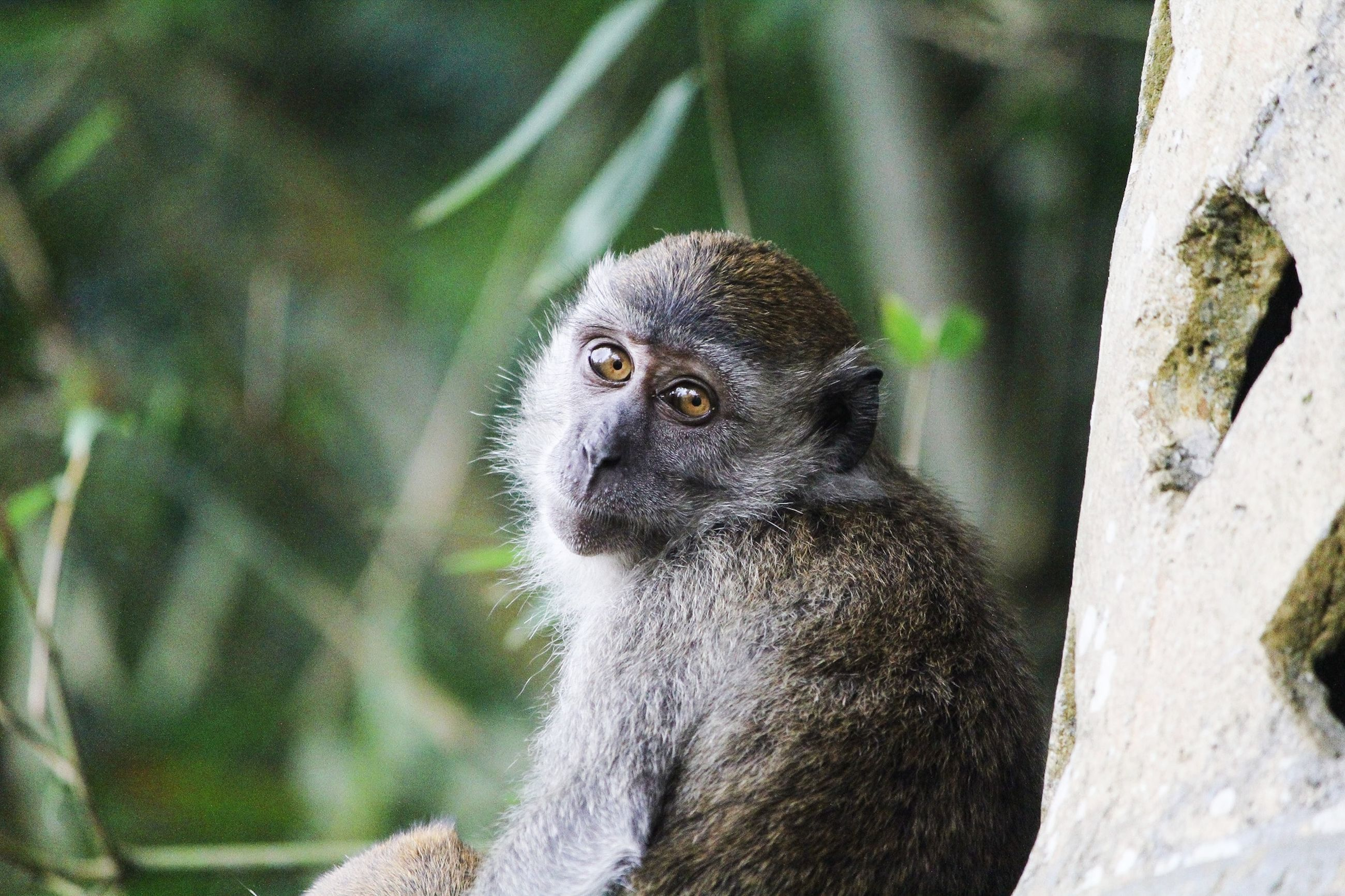 animal wildlife, animals in the wild, one animal, primate, mammal, vertebrate, focus on foreground, tree, day, looking, no people, close-up, nature, looking away, plant, portrait, outdoors, care