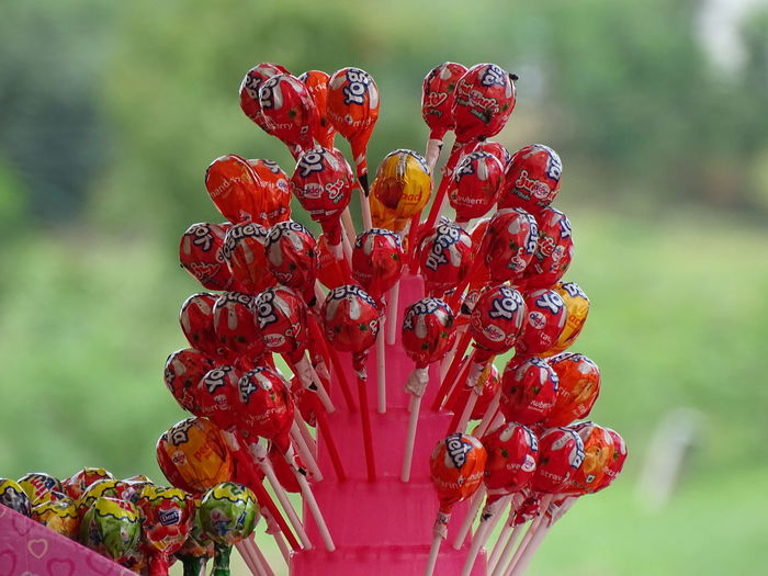 Beauty In Nature Chocolate Close-up Day Flower Flower Head Growth Lolipop :) Nature No People Outdoors Red Sweet Food