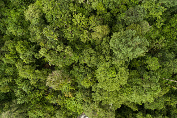 Aerial top view green forest for background Green Color Plant Backgrounds No People Food And Drink Full Frame Food Nature Freshness Kale Abundance Growth Day Vegetable Tree Outdoors Leaf Close-up Lush Foliage Beauty In Nature