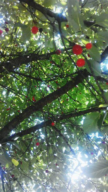 Mygarden:) Enjoying The Sun Cherrytree Ukraine Amazing Day Enjoying Life