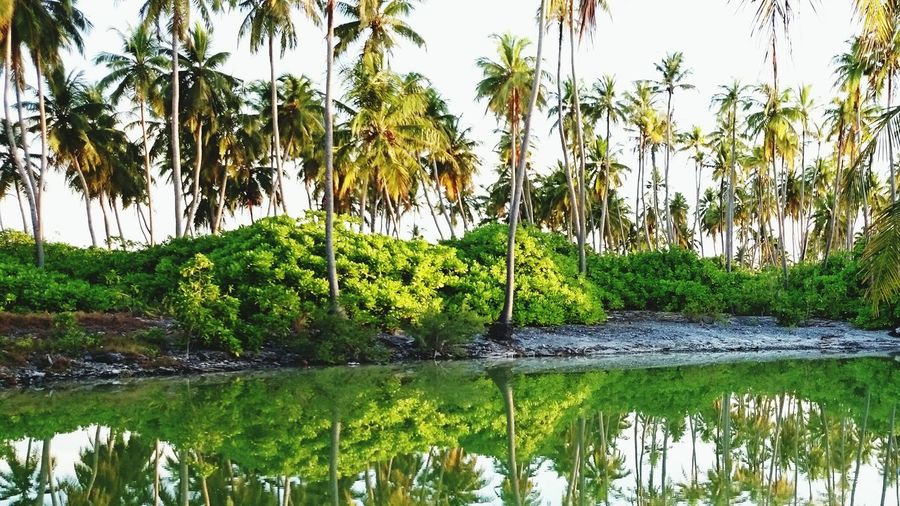 Greenery Water Reflections Share Your Adventure Pond Crystal Clear Reflection Trees Coconut Trees Sky And Trees Natural Beauty