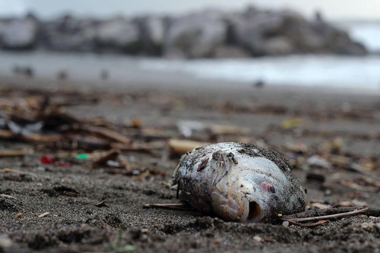 Dead fish at beach