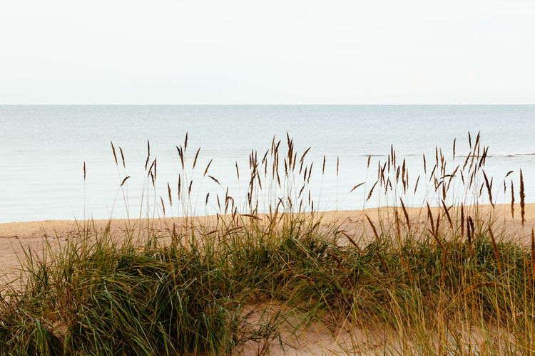 Baltic Baltic Sea Beach Beauty In Nature Beauty In Nature Clear Sky Day Grass Growth Horizon Over Water Latvia Marram Grass Nature No People Outdoors Plant Salacgrīva Scenics Sea Sky Tranquil Scene Tranquility Water