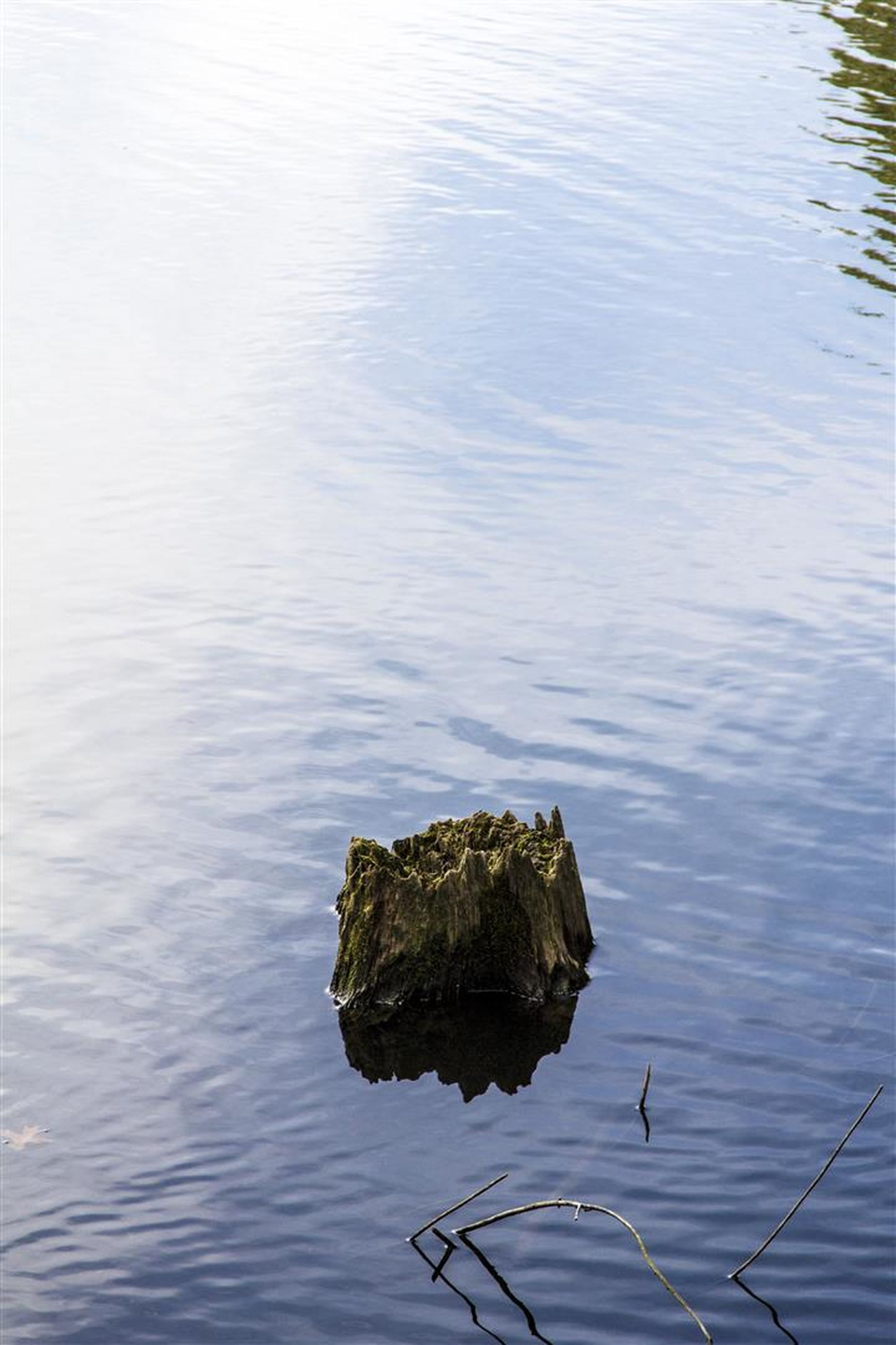 water, bird, animal themes, animals in the wild, lake, wildlife, waterfront, swimming, reflection, rippled, high angle view, nature, tranquility, duck, beauty in nature, one animal, rock - object, day, outdoors, floating on water