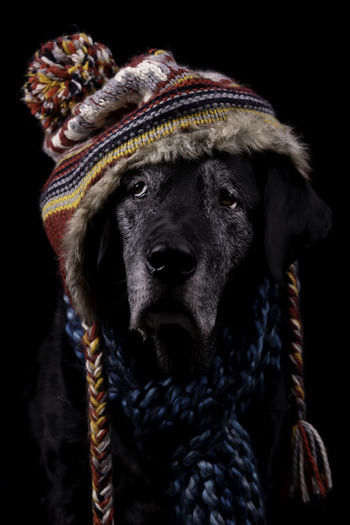 Black dog wearing winter hat and scarf