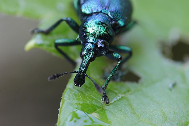 Animal Insect