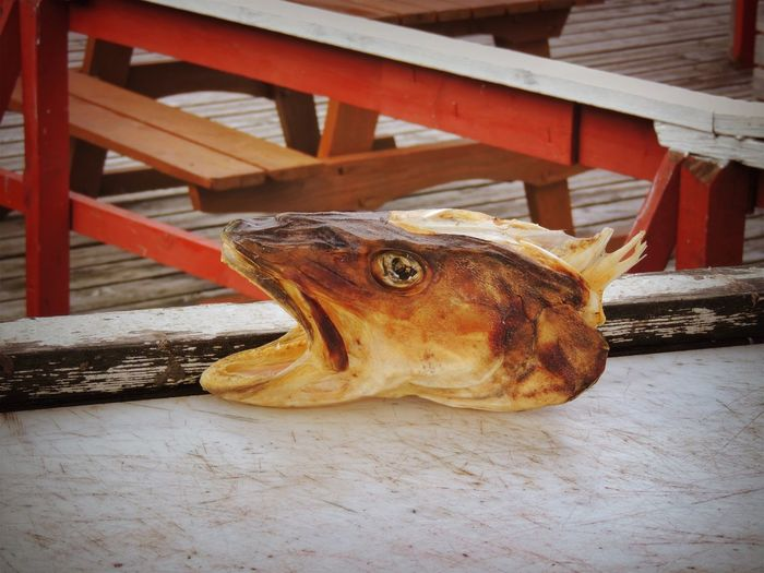 Norway Animal Animal Head  Animal Themes Close-up Day Domestic Domestic Animals Dry Fish Fish Food Food And Drink Freshness High Angle View Mammal No People One Animal Outdoors Relaxation Table Vertebrate Wood - Material