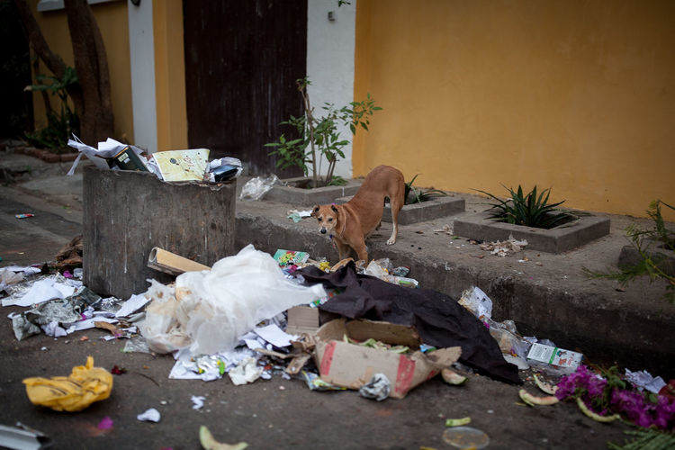 "From""Dogs never bite me"" rachelbandi #animal #City #crazy #cute #smile #love  #cute #daytime #dog #doglovers #ecology #skateboard #manifesto #hedicho #eyembestshot #funny #India #love #photography #pollution #street #streetphotography #yellow Animal Themes Building Exterior Day Garbage No People Outdoors Pets The Street Photographer - 2017 EyeEm Awards"