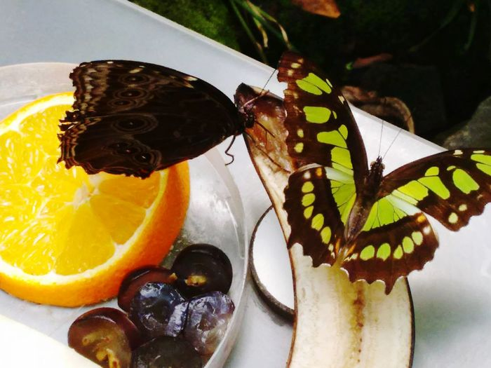 Butterfly Hello World Hanging Out Taking Photos Check This Out Hi! Dieren Zooanimals Zoo