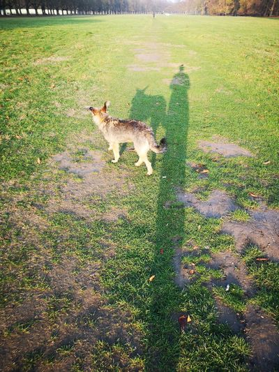 November morning... EyeEm Pets Lover Eyeem Best Of The Day Dogwalk Today Shadows In The Morning Dog Shadow Cheetah Shadow Feline Field High Angle View Grass Green Color