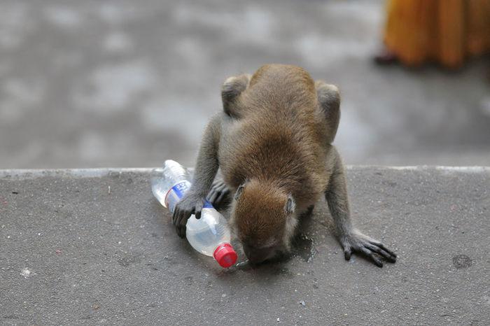 Batu Caves Batu Caves -Malaysia Break Drink Kuala Lumpur Kuala Lumpur Malaysia  Malaysia Monkey Thief
