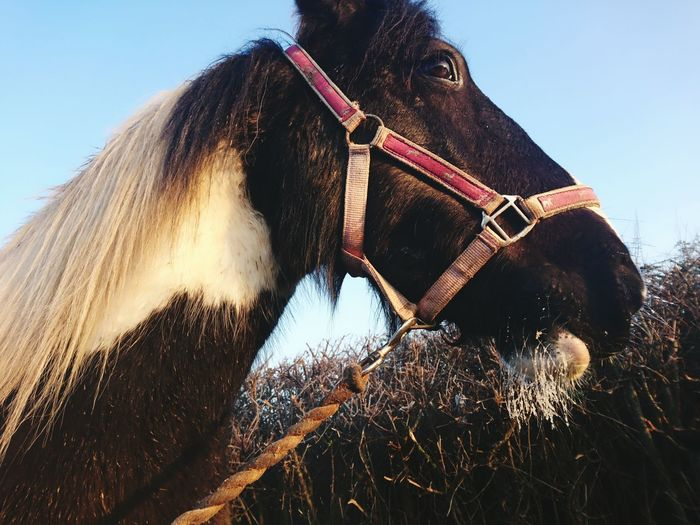 Domestic Animals Outdoors Sky Sunlight Frost Frosty Frosty Mornings Frosty Beard Horse Horse Photography  Cold Temperature Whiskers Frosty Whiskers