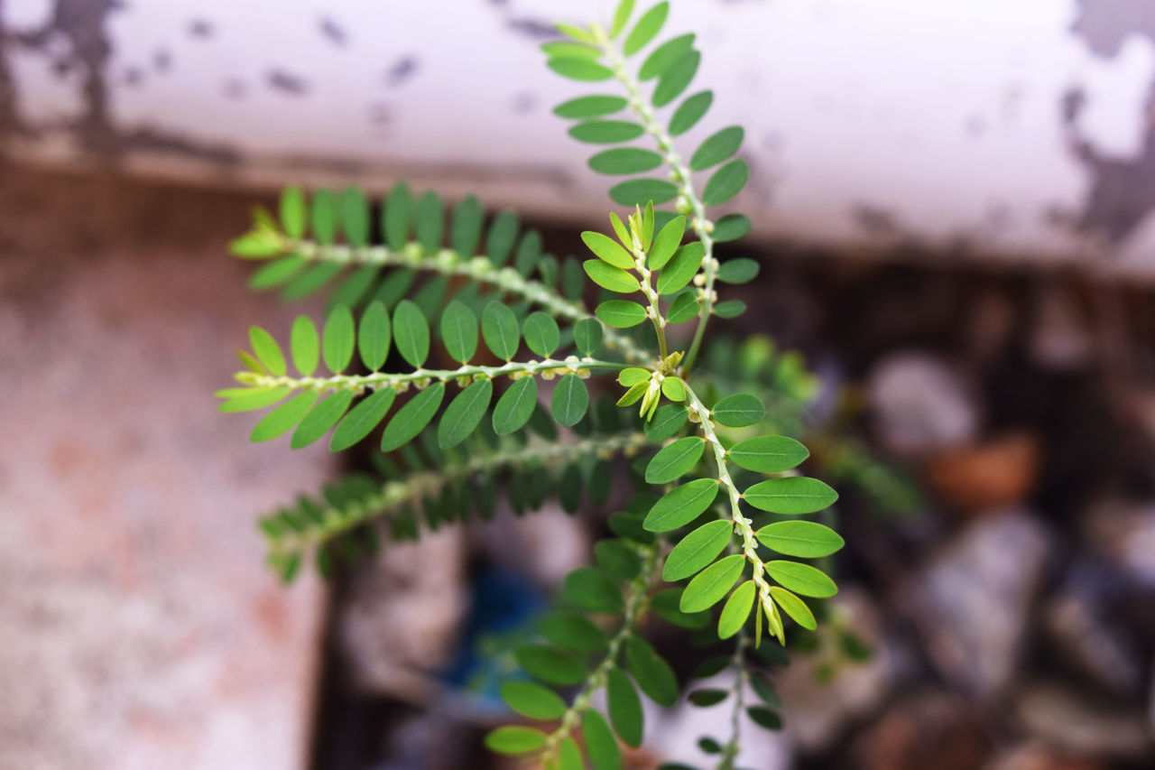 leaf, growth, green color, plant, nature, close-up, focus on foreground, day, no people, fragility, outdoors, beauty in nature, freshness