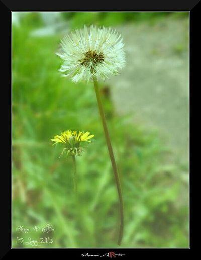 Flowers Hello World Mexico De Mis Amores Mexican Nature_collection Naturaleza laion 🙌
