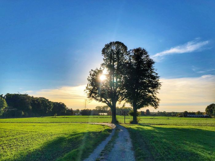 Trees in the sun Nature Sky Green Color Sunset Tree