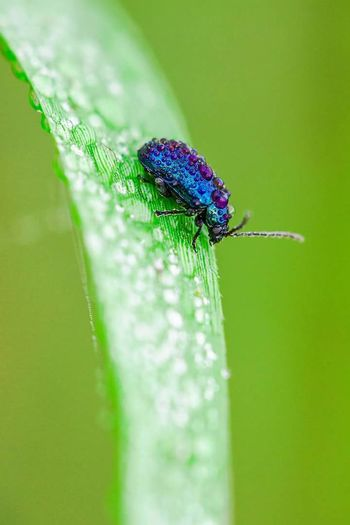 Taking Photos Macro Beauty Nature Photography Bugslife Marcrophotography