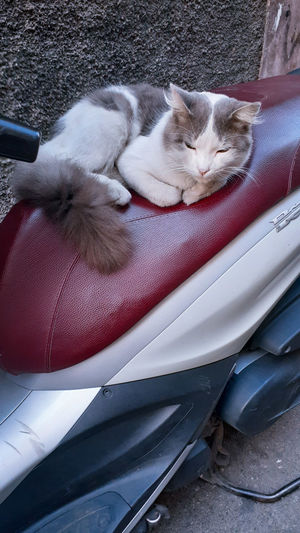 High angle view of cat relaxing on car