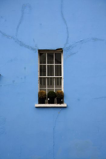 Potted Plant On Window Of Blue House