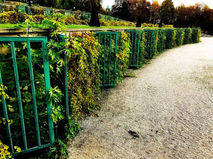 Potsdam Park Sanssouci Growth Sunlight Plant Green Color Outdoors Nature Day Tranquility No People Beauty In Nature Freshness Pflanzen Weinberg Weinbergterrassen IPhone 7 Plus Still Life Fine Art Plant Green Color Nature Park Sanssouci Park Potsdam