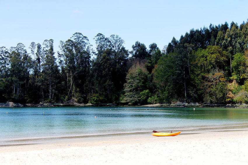 Beach And Forest Beach And Sand Fine Sand Fishing Boat Fishing Time Hill Kayak Pine Trees Travel Destinations