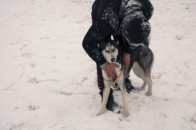 Dog Greece Husky Man Pets Snow Thessaloniki Port  Winter
