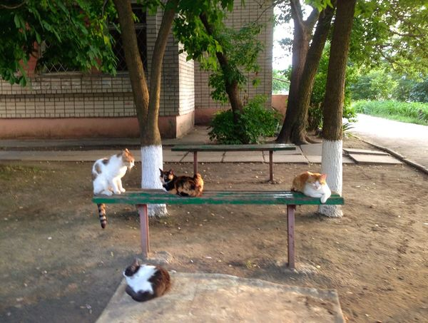 Коты котэ кот Homeless Cats Cats Cat♡ Cat