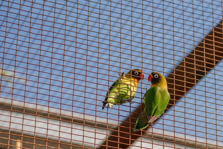 Close-up of parrot perching on fence