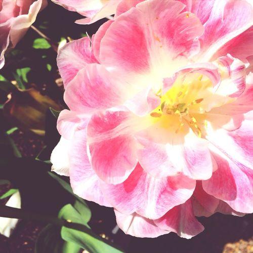 Flower Spring Enjoying Life Sun