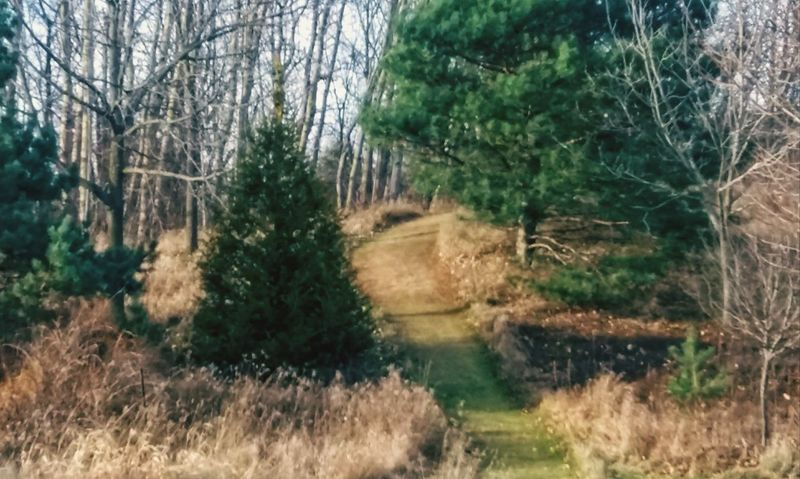 Tree Nature No People Water Outdoors Day Growth Bare Tree Grass Tranquility Forest Beauty In Nature Branch Sky Pathways Pathway To Heaven Pinetrees Pine Needles Pines