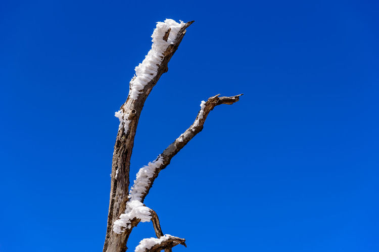 Blue Sky Low Angle View Tree Clear Sky No People Branch Copy Space Day Plant Nature Tranquility Beauty In Nature Bare Tree Outdoors Dead Plant Bird Animals In The Wild Scenics - Nature Tree Trunk