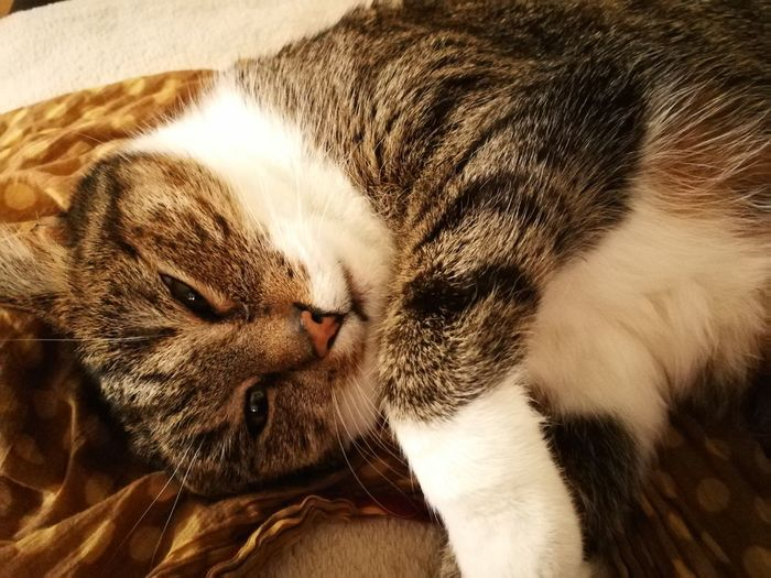 One Animal Animal Themes Mammal Sleeping Eyes Closed  Pets Domestic Animals Day Relaxation Domestic Cat Indoors  No People