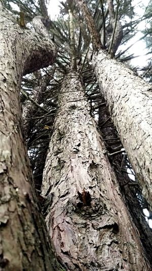Tree Arvore árvores Madeira Nature Wood Tree Wood Tree Tree Trunk Textured  Forest Close-up
