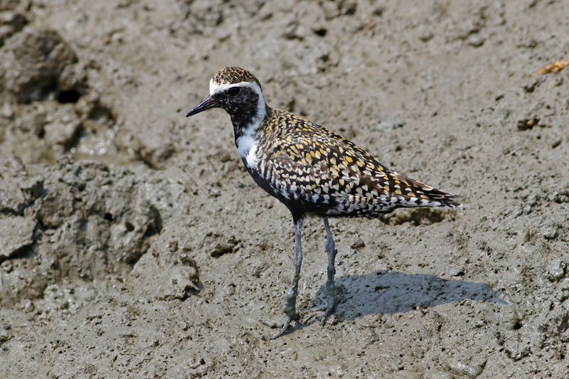 Animal Themes One Animal Animal Wildlife Animals In The Wild Animal Bird Vertebrate No People Land Nature Day Sand Focus On Foreground Close-up Beach Full Length Side View Perching High Angle View Outdoors