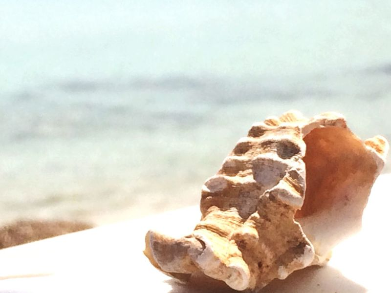 Sun ☀ Mare Beautiful Peace And Quiet Conchiglie Riposo Beach