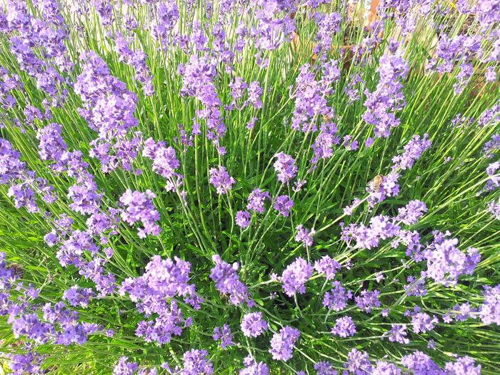 Flower Blumen
