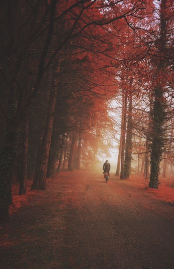 Rear view of man riding bicycle on road in forest