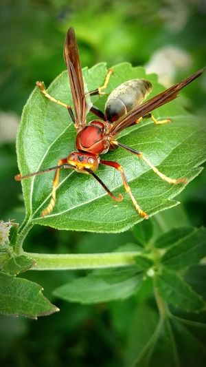 Insect Animal Wildlife Leaf Animals In The Wild Nature One Animal Animal Themes Day Outdoors No People Close-up Macro Photography Coldbreeze