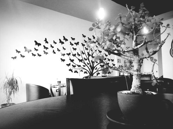 Amorsito Corazon💛 Coffee Time