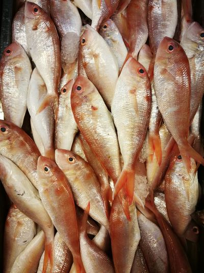 Abundance Animal Backgrounds Close-up Fish Fish Market Fishing Industry Food Food And Drink For Sale Freshness Full Frame Healthy Eating Large Group Of Objects Market Market Stall No People Raw Food Retail  Retail Display Sale Seafood Street Market Vertebrate Wellbeing