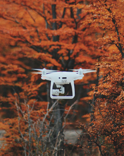 Drone  Close-up Day Forest Nature No People Outdoors Technology Tree